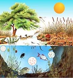 Ciencias Naturales: PROPIEDADES DE LOS SERES VIVOS