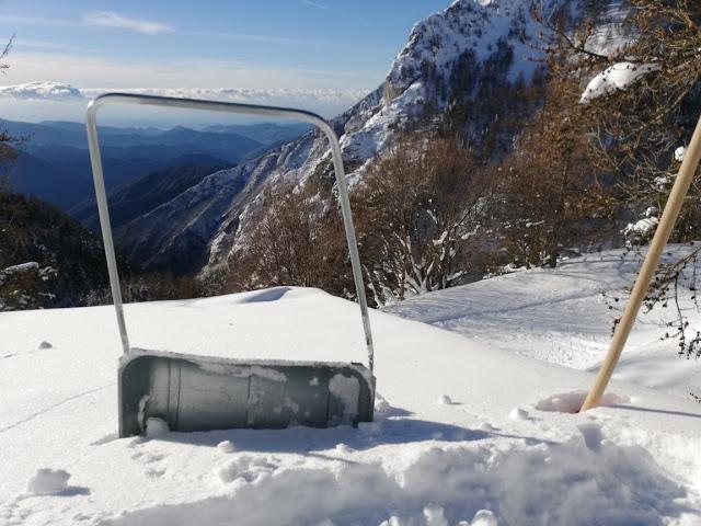 Melosa sotto la neve