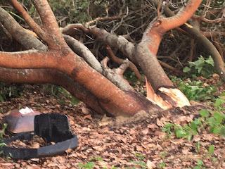 Chuva causa alagamentos e vento forte derruba árvores em Jaçanã neste sábado (29).