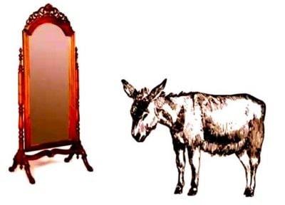 El burro y el espejo, fábula