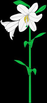 Dibujo Heráldico La Flor De Lis