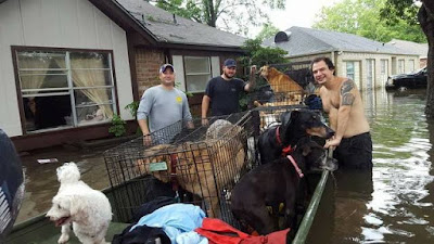 Hurricane animal rescue