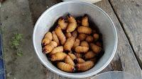 O que significa sonhar com larvas na comida