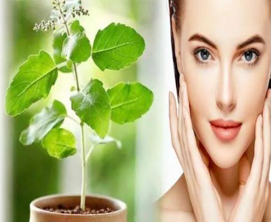 तुलसी से चेहरे को सुंदरता बढ़ाने के लिए यह है सरल उपाय