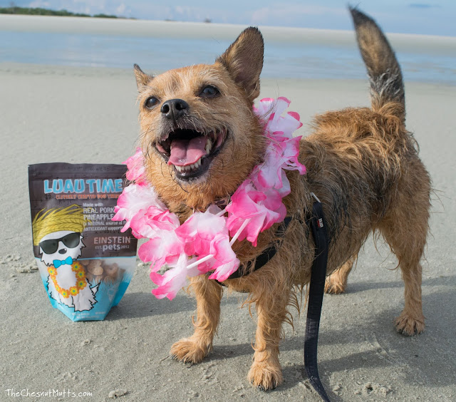 Mini Review: Einstein Pets Luau Time Dog Treats