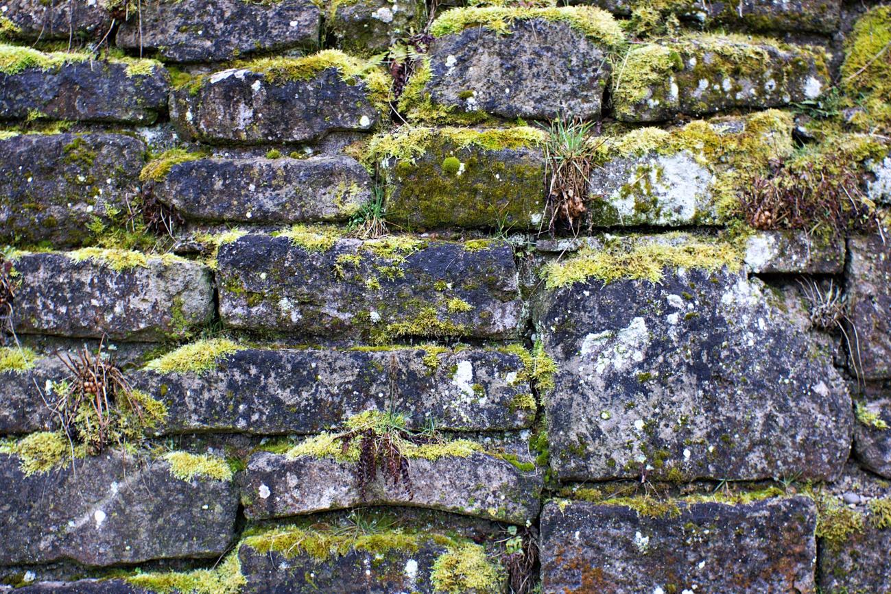 Fassaden&Mauern #11 — Die Natur gewinnt