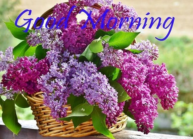 Good Morning Greetings with Lilac Flowers
