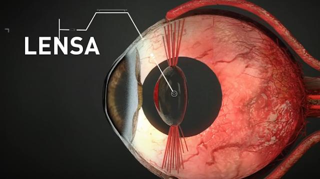 Bagian detil Lensa mata
