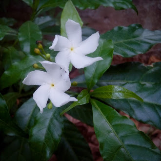White flower | little flower