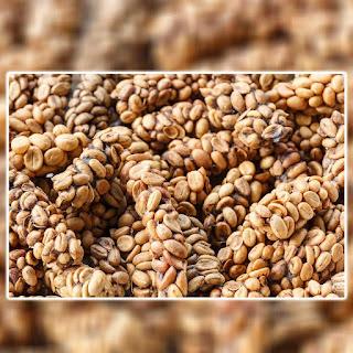 produsen kopi luwak