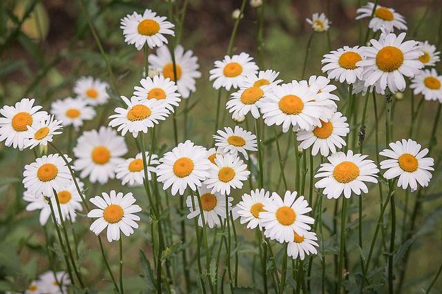 hoa dại đẹp nhất 5