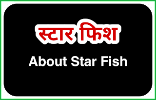 Star Fish. स्टार फिश। About star fish.