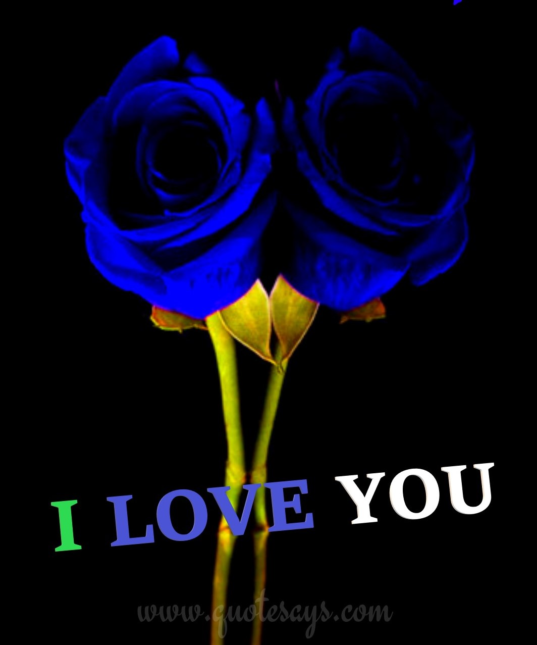 I Love You Images with Two Blue Rose
