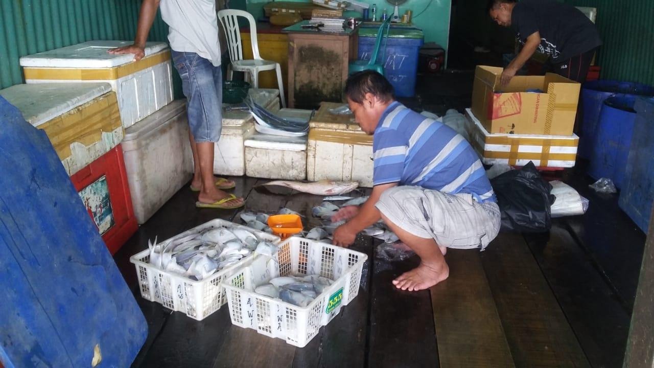 Hasil Laut Melimpah, Harga Jual Ikan Menurun