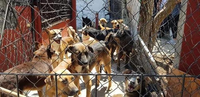 Atlixquenses protectores de animales piden mayor cuidado al alcalde de la perrera municipal