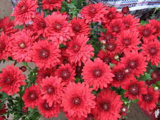Цветок Зинаиды - гладиолус