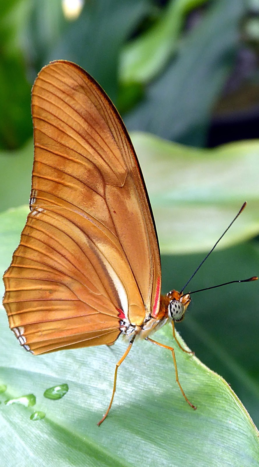 Macro photo of a brown butterfly.