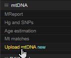 YFull mtDNA