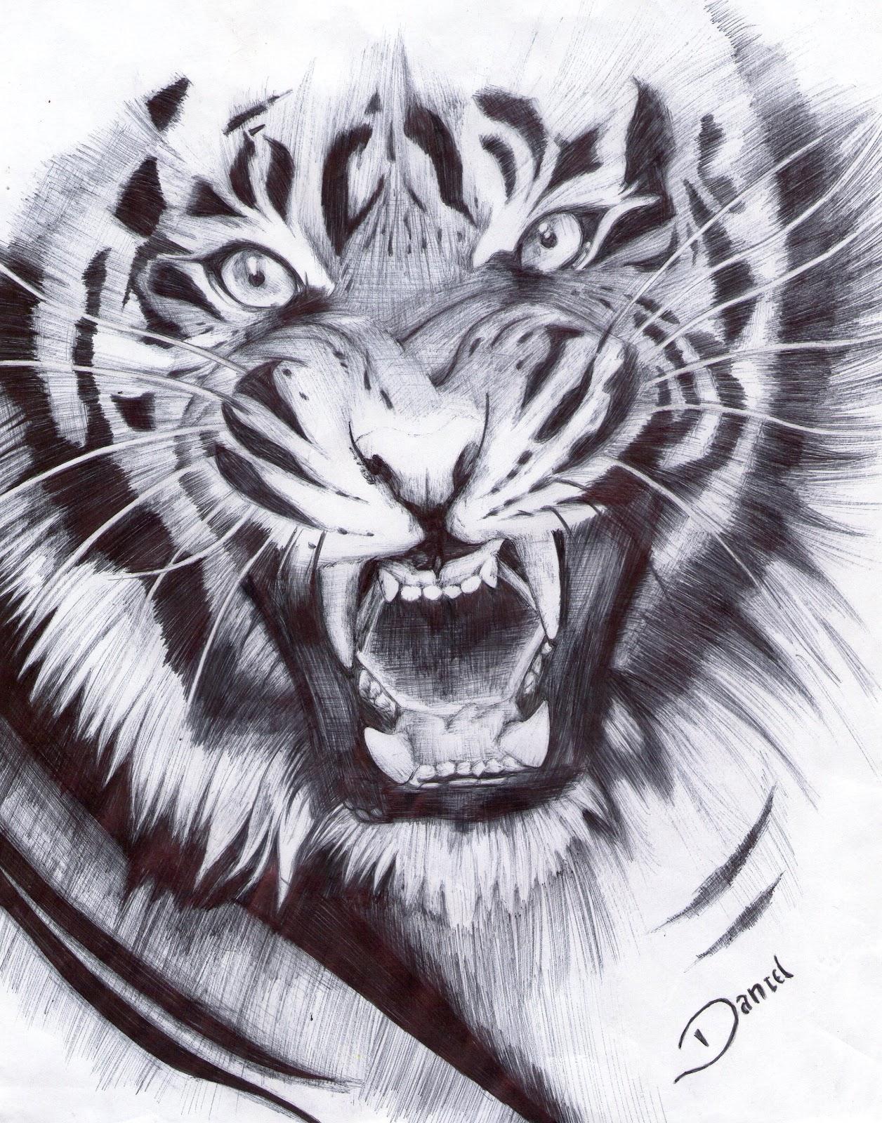 Tigre Tiger L