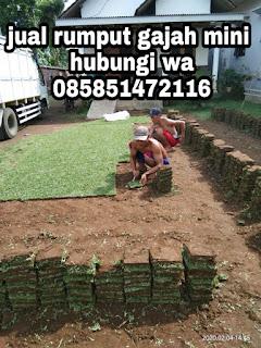 Pengiriman rumput gajah mini , tanah taman , dan pupuk organik di sidoarjo