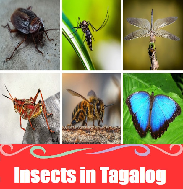 Insect Names : Word List in Tagalog