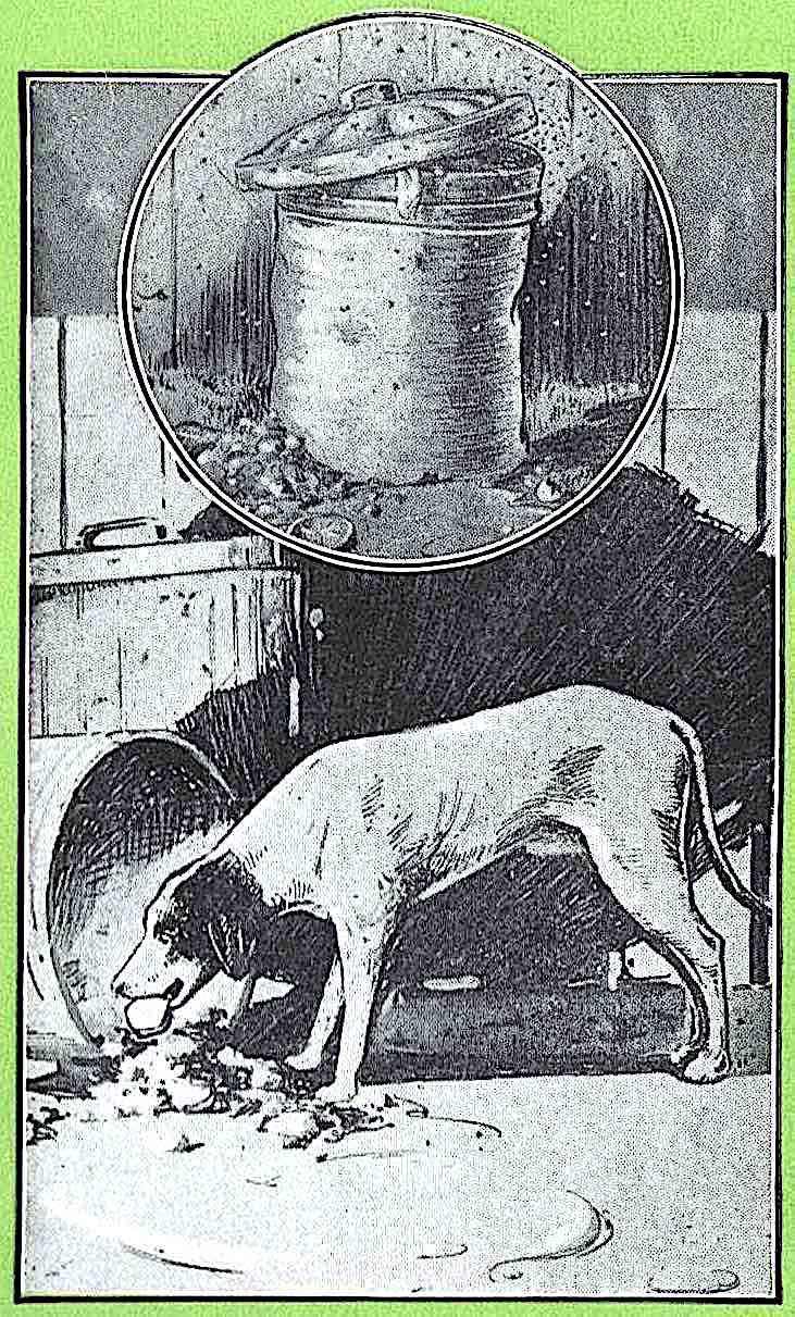 a 1922 illustration of a dog eating from trash cans