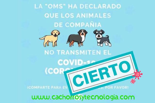 dog puppy NO transmite covid-19 Coronavirus cachorros tecnologia shurkonrad 3