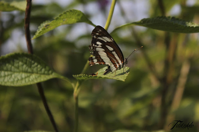 Butterfly Garden, Thane, Wildlife Photography