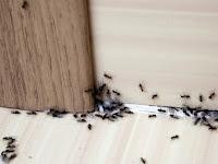 Cara Mengusir Semut Di Rumah dengan Bumbu Dapur