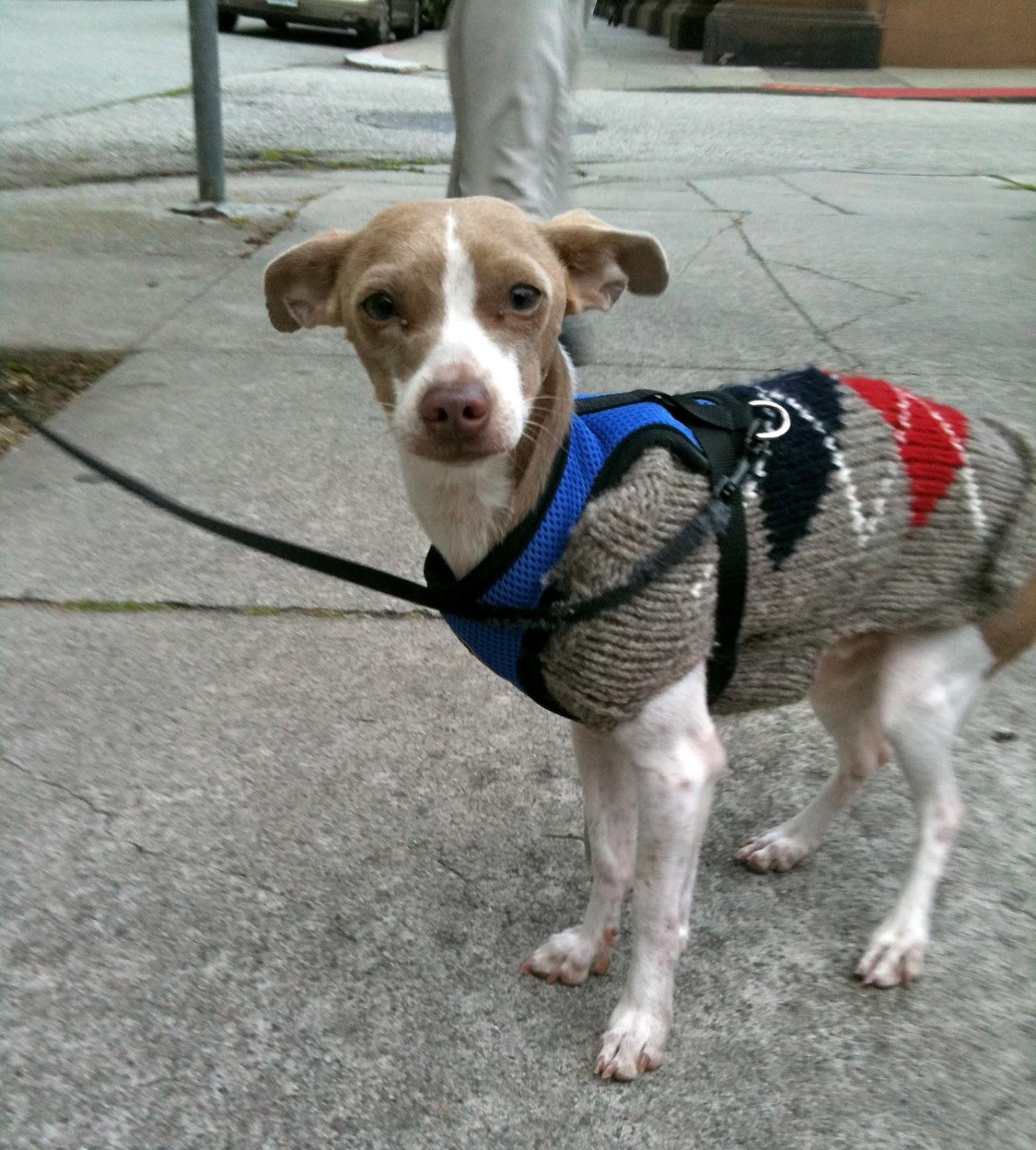 4Paws Outdoors Dog Blog: Doggy Body Language