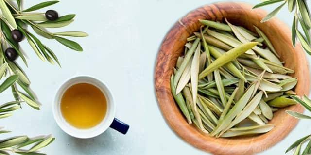 zeytin yaprağı çayı ne işe yarar,  zeytin yaprağı çayı demleme - www.kahvekafe.net