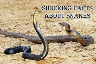Shocking Facts About Snakes