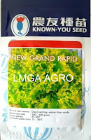 selada new grand rapid,benih selada new grand rapid,selada brintik unggul,known you seed