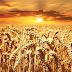 VN-rapport: landgebruik put bodems uit en verergert klimaatverandering