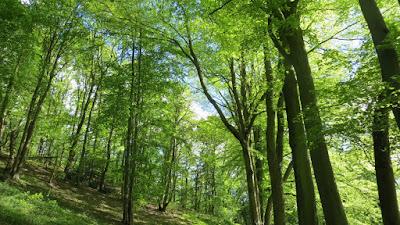 photo du bois de la charbonnière Corny 27