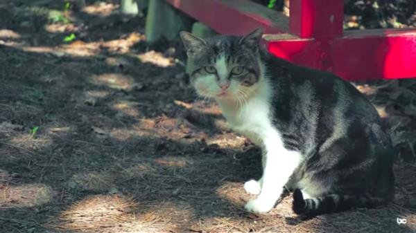 cat on cat island