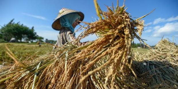 Memajukan Sektor Pertanian Indonesia