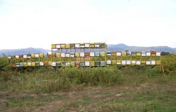 APICULTURA EN RUMANIA - BEEKEEPING IN ROMANIA