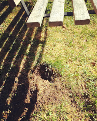 keinun alla nurmikossa koiran tekemä kuoppa