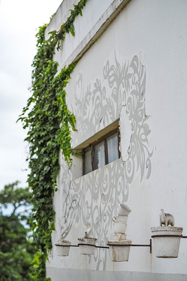 White wall with green ivy