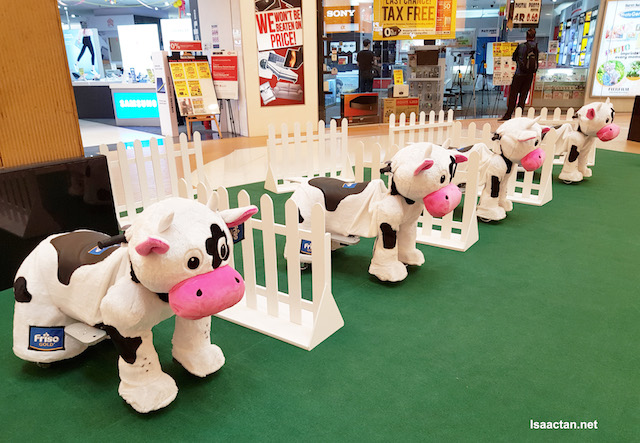 The Mini Frisian Cows ready to be ride on by your kid!