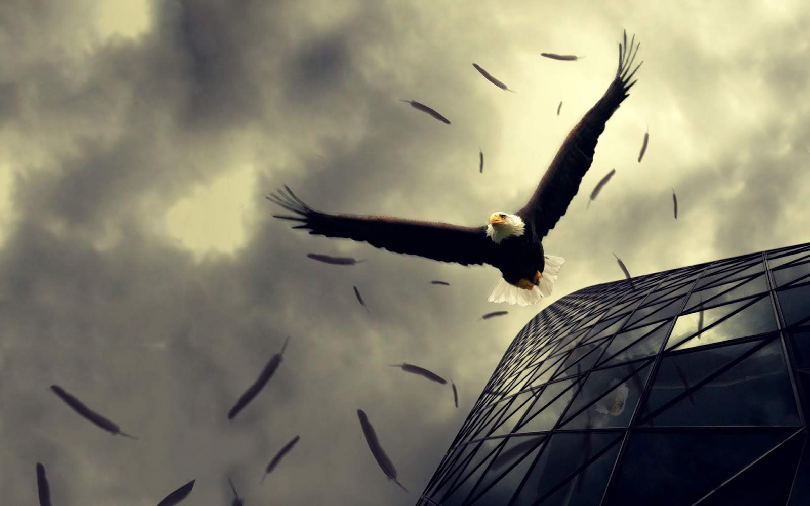 Eagle Wallpapers خلفية النسر 8k