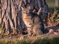 Tierporträt Katze Heimtier fotografiert von Fotograf Michael Schalansky