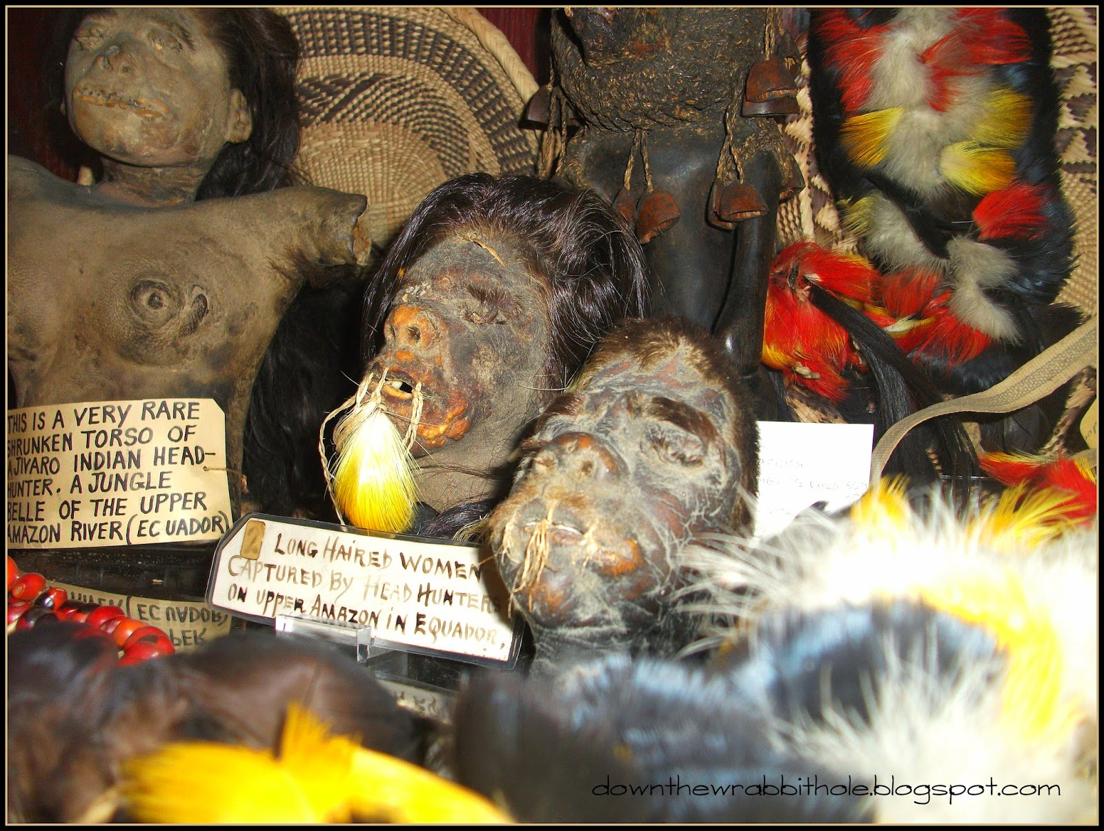 Seattle curiosity shop shrunken heads