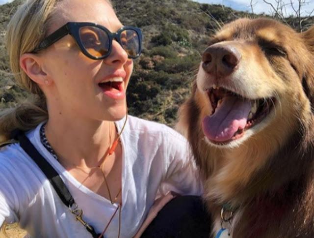 Australian Sherpherd, dogs,