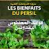 المعدنوس أو البقدونس – تعرف على فوائد مغلي البقدونس الطبية Les Bienfaits du PERSIL