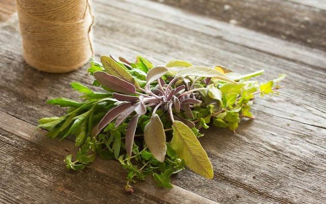 Tumbuhkan Kebun Teh Herbal Anda Sendiri