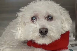 Her mom died and no family member want her, Blind senior begging to be saved from deadly shelter