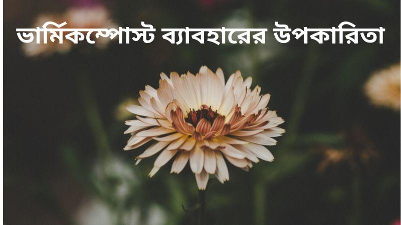 ভার্মিকম্পোস্ট ব্যাবহারের উপকারিতা
