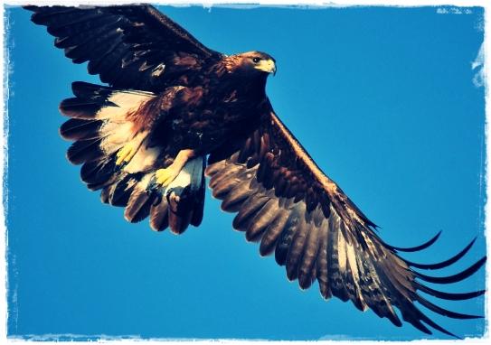 66+  Gambar Burung Elang Dan Anaknya HD Paling Bagus Gratis
